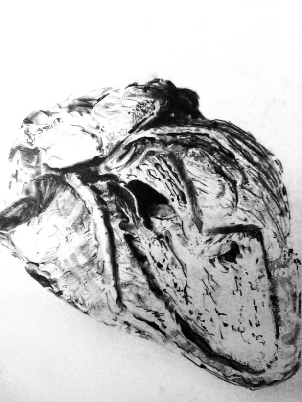 Lauren A. Toomer Drawing Life (human heart), 2014 Graphite on paper