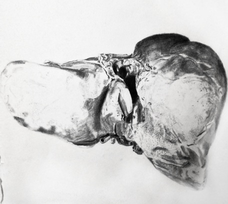 Drawing Life (human liver), Graphite on paper