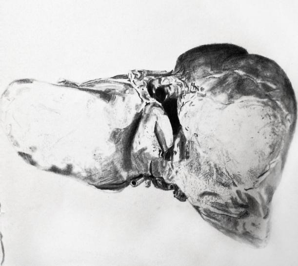 Lauren A. Toomer Drawing Life (human liver), 2014