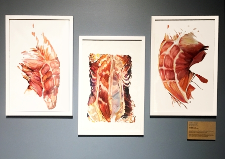 "Tech Museum ""Body Worlds Decoded Exhibit"" On view: October 15, 2017 – September 2018 Torso I, II, III (triptych), oil on canvas, 36 x 24 inches each"