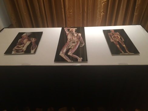 !8th Century wax Anatomical models, Florence, La Specola, Photographs